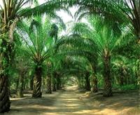 Making Sense of Palm Oil