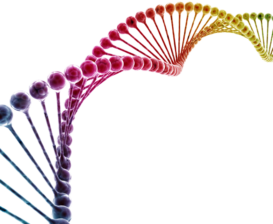 The Design of Our Genes